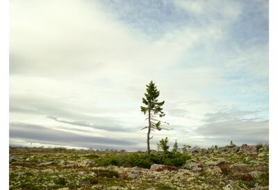 Rachel Sussman, Spruce Gran Picea # 0909 - 11A07 (9,550 years old; Sweden), 2009. Archival print, 111.8 x 137.2 cm. © the artist 2020. Courtesy the artist