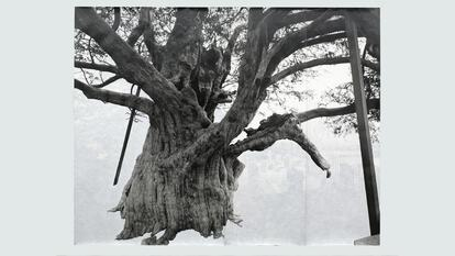 Tacita Dean, Crowhurst II, 2007, gouache on photograph, 297 x 380.5 cm