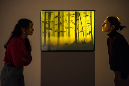 Mariele Neudecker, And Then the World Changed Colour Breathing Yellow, 2019, at Among the Trees, Hayward Gallery, 2020. © Mariele Neudecker 2020. Courtesy of Hayward Gallery. Photo Linda Nylind.
