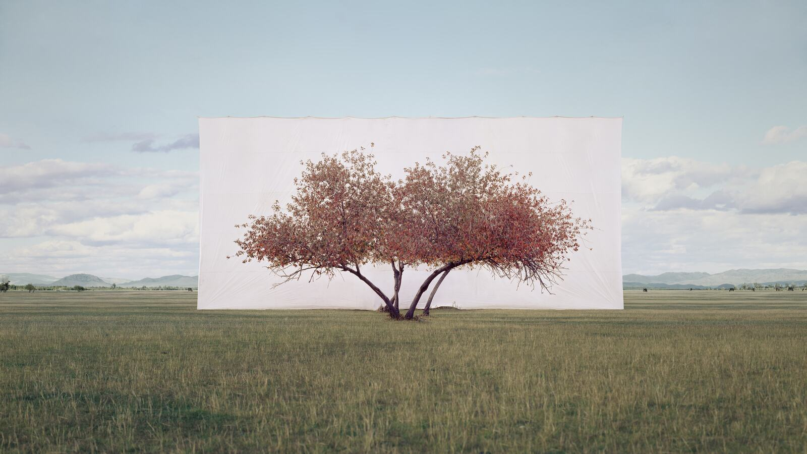 Myoung Ho Lee, Tree... #2, 2012. ©️ the artist. Courtesy Myoung Ho Lee and Gallery Hyundai.