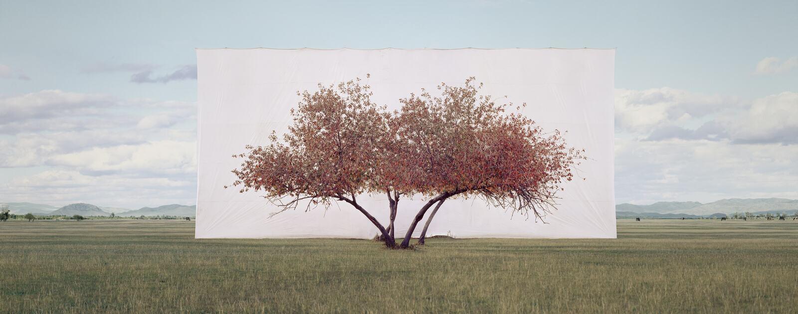 Myoung Ho Lee, Tree... #2, 2012. ©️ the artist. Courtesy Myoung Ho Lee and Gallery Hyundai.