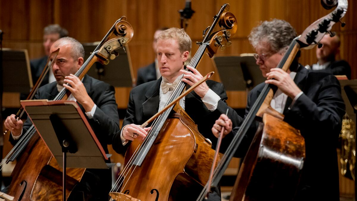 Musicians at the Philharmonia concert playing the cello