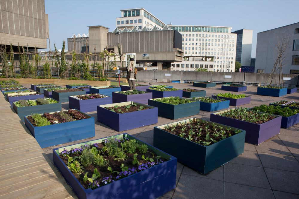 Support The Roof Garden