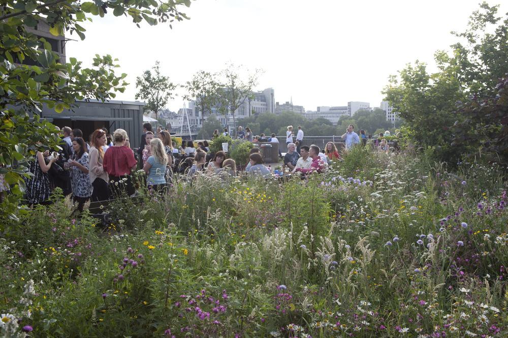 Queen Elizabeth Hall Roof Garden
