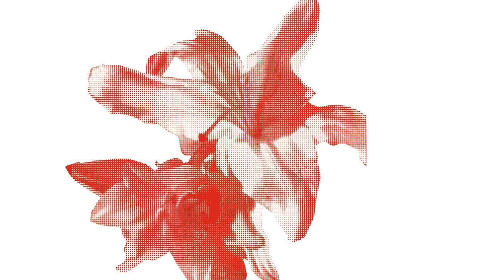 Richard Ayres, illustration of flower