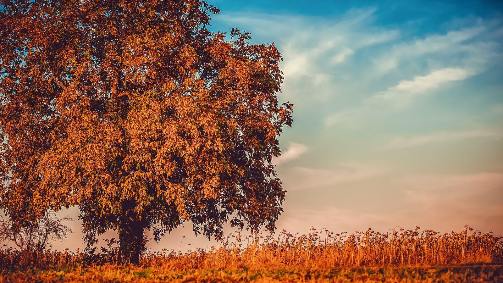 Autumn tree landscape